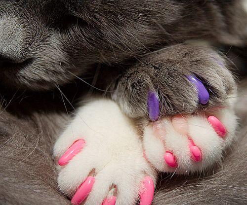 soft-paws-2