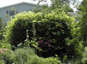 For years, this arbor hid a multitude of sins ... er, snakes.